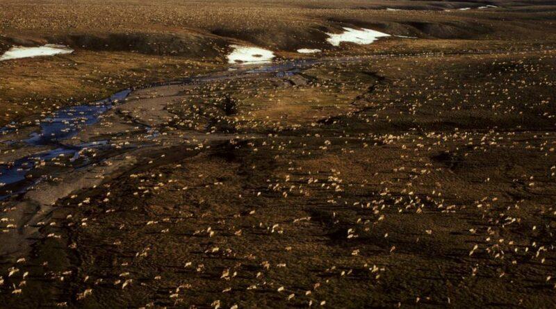 biden-suspends-oil-leases-in-alaska's-arctic-refuge-–-miami-herald