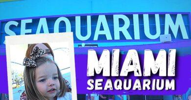 Miami Seaquarium | Things to do in Miami Florida