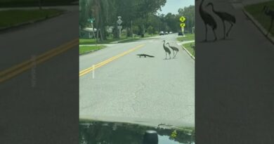 """""""You know you live in Florida when…"""" 🐊"""