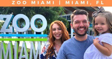Zoo Miami   Things to do in Miami, Florida