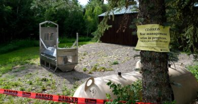 grizzly-shot,-killed-after-fatal-attack-of-california-woman-–-miami-herald