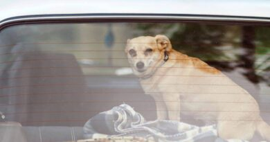 peta-wants-people-to-stop-leaving-dogs-in-hot-cars-–-miami-new-times