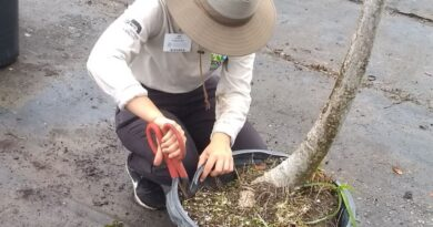 my-internship-in-horticulture-at-zoo-miami-–-fiu-news