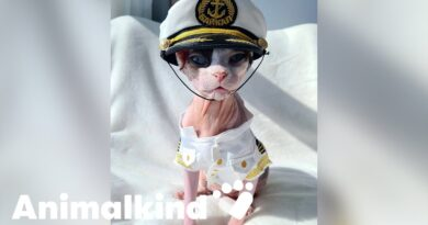 Cruise kitty makes the cutest first mate | Animalkind