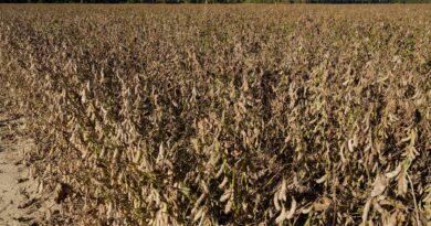 lawsuit:-farm-hired-white-immigrants-over-black-us-laborers-–-miami-herald