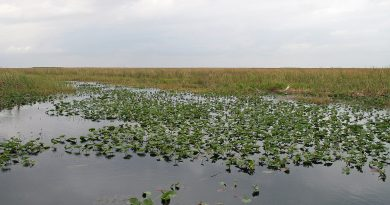 gov.-desantis-pulls-one-road-from-the-everglades,-but-oks-putting-in-another-–-florida-phoenix